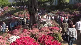Азалиевый бугор храма Нэйдзи. Токио