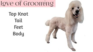 Standard Poodle Grooming including the Top Knot and Tail