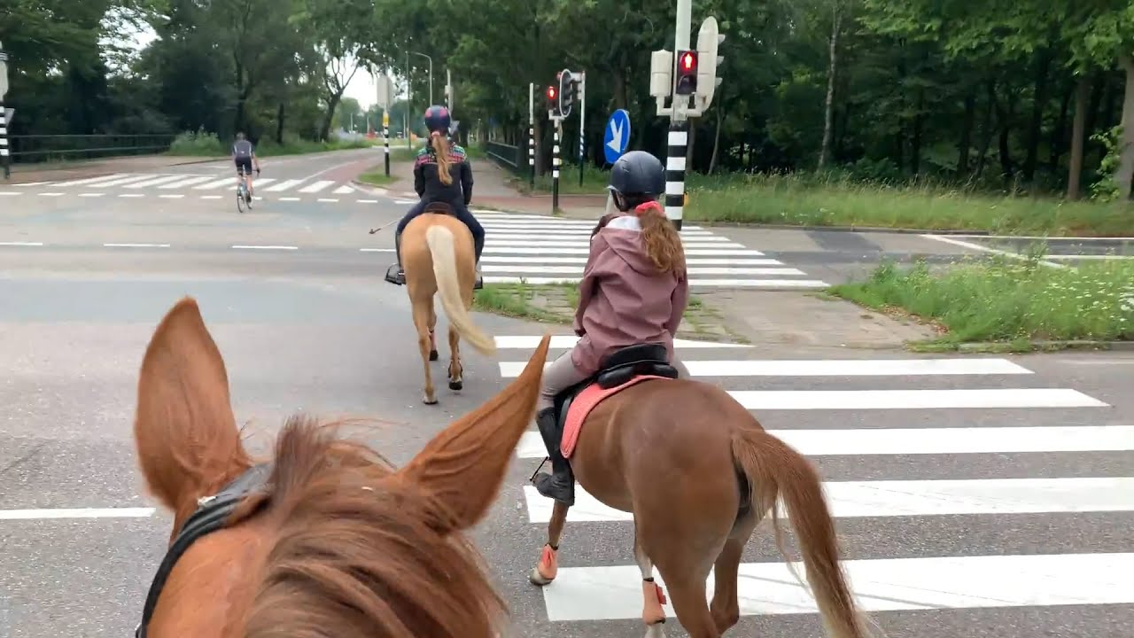 Jull en Bella komen logeren - Weekvlog 1/2 - * Hart voor Paarden *
