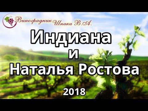 Индиана и Наталья Ростова урожая 2018 года