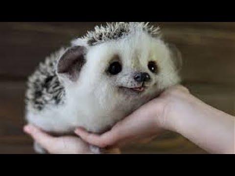 世界で最も可愛い動物ランキングTOP20 【 動物かわいい厳選ランキング】