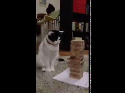 Cats Playing Jenga...
