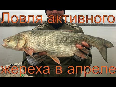 Рыбалка в Астрахани. Камызякский район. Апрель 2017. Часть 4. Активная ловля жереха.
