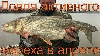 Рибалка в Астрахані. Камызякский район. Квітень 2017. Частина 4. Активна ловля жереха.