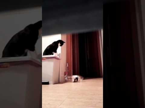 Naughty cat Diablo keeps knocking over bottles