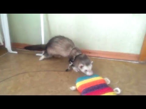знакомства кошки кот