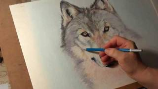 Fast drawing - Wolf  in soft pastel.wmv