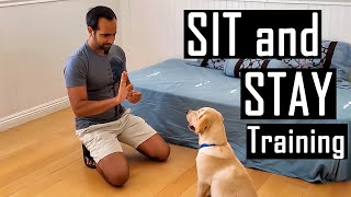 How to Train your Dog or Puppy to Sit and Stay | How I Trained Buddy (Easy Dog Training at Home)
