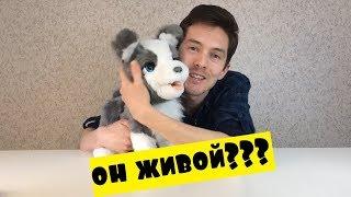 Обзор игрушки Щенок Хаски Furreal Frends ricky the treat lovin pup E0384