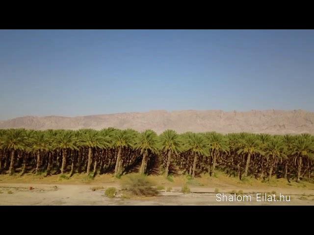 Kirándulás izraelben Eilat.hu társaságában