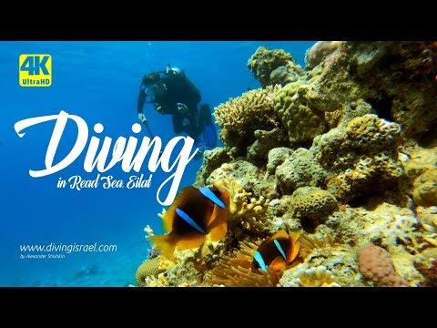 Diving In Eilat • Red Sea, Israel 4K UHD