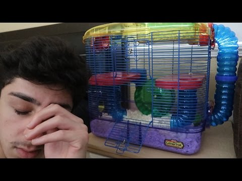 MY HAMSTER ESCAPED... :(