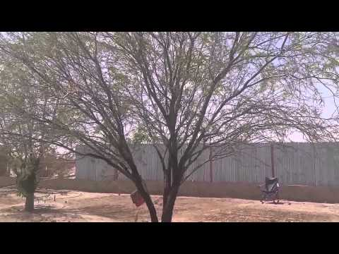 A small wind storm on the farm in southern Arizona!