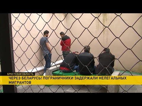 Пограничники поймали нелегалов, пытавшихся незаконно пересечь границу