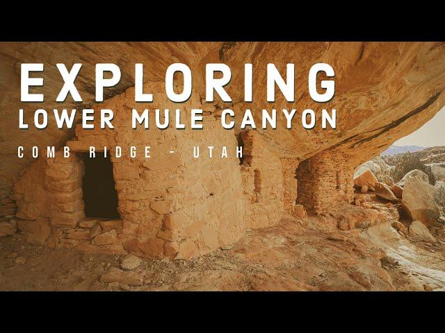 Exploring Lower Mule Canyon - Comb Ridge, Utah