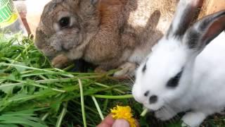 favorite food of rabbits