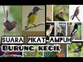 Suara Pikat Berbagai Burung Kecil Ampuh  Mp3 - Mp4 Download