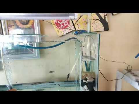 Contoh Filter aquarium \