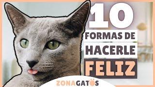 10 formas de hacer FELIZ a tu gato