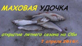 Рыбалка в Сибири #6. Открытие сезона маховой удочки на Оби, устье реки Ельцовка. (7 апреля 2016г.)