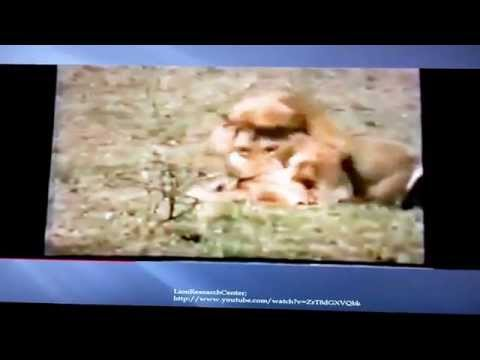JeanPaul Willson & Cody Cotton; Lion Inticide