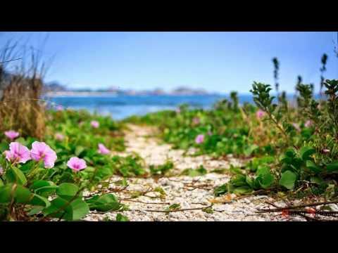 Chuyện Tình Hoa Muống Biển - Trường Sơn