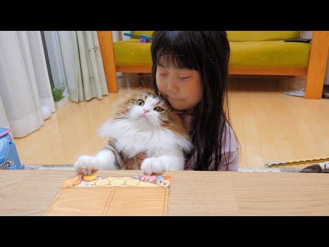 こたつでカードゲーム中の家族に混ざりたい猫