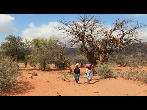 S.African villagers tap into trend for 'superfood' baobab