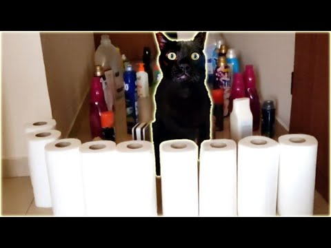 Cats Obstacles Challenge | Cat Obstacle Course Video