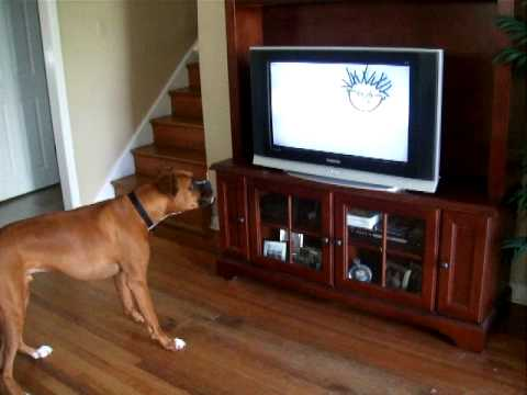 My Dog Dupree Hates baby Einstein - YouTube