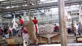 رحلة شراء خروف من المسلخ وذبحه وتقطيعه