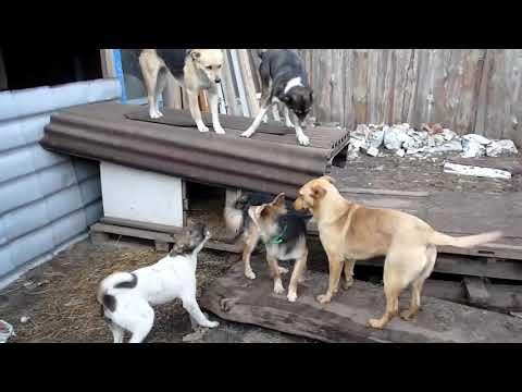 Клепа знакомится с новой семьёй (щенок из дома ужасов)