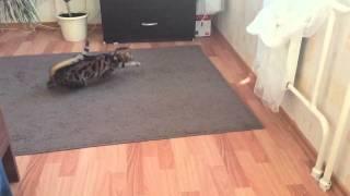 Замедленная съемка кота