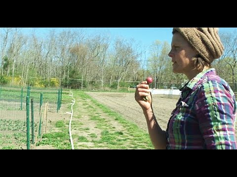 Rise and Shine with Early Girl's Organic Farm