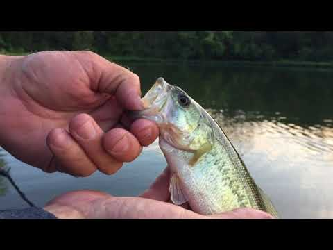 Best three baits to cover water in early fall
