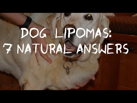 Dog Fatty Tumors: How to Tell and Treat Lipomas At Home - YouTube