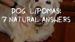 Dog Fatty Tumors: How to Tell and Treat Lipomas At Home
