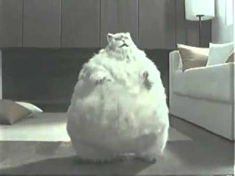 Dikke dansende kat fat dancing cat