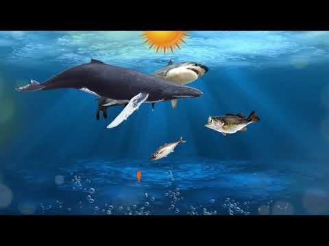 The Fish Food Chain