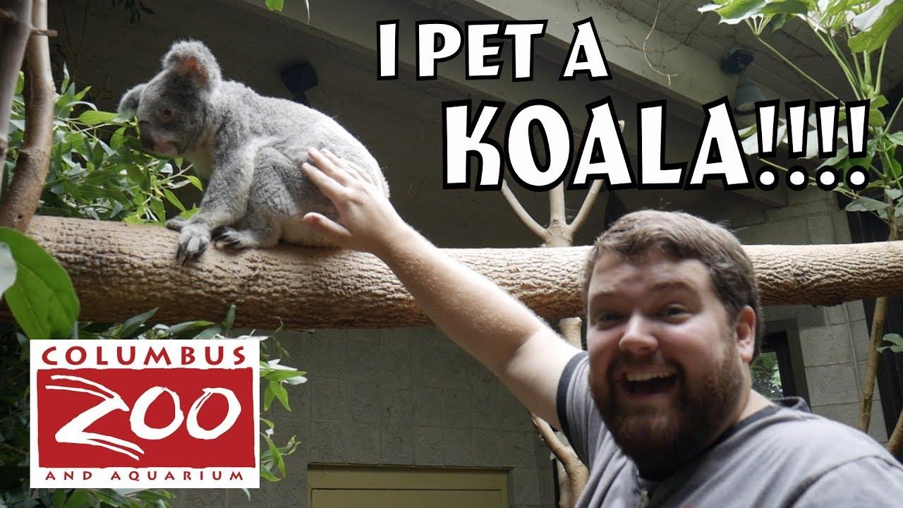 I PET A KOALA! - Columbus Zoo Animal Expereince