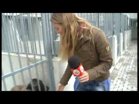 CODIGO 10-17 Centro Protección Animales De Madrid