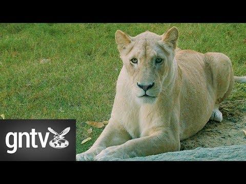 Inside the Dubai Safari