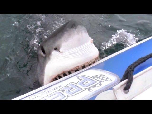 Plivali su u gumenom čamcu, a onda ih je iznenada napala ogromna ajkula!