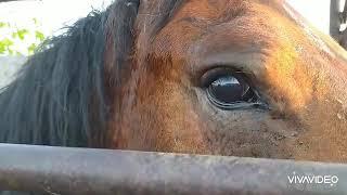 Глаза чокнутой лошади. Всё, с ней решено!
