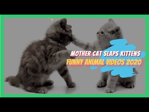 funny cat videos 2020 - Mother Cat slaps kitten - the funniest and most humorous cat videos ever !