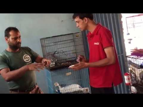 """RABBIT FARMING IN NEPAL - TRAINING BY  RAM PATEL , FOUNDER OF """"ONE VILLAGE ONE RABBIT COOPERATIVE """""""