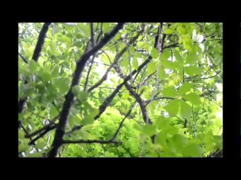 Ramble Central Park Documentary