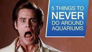 5 Things You Should Never Do Around Your Aquarium