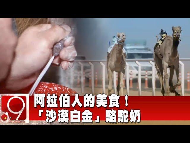 阿拉伯人的美食! 「沙漠白金」駱駝奶《9點換日線》2020.01.14
