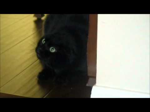 World's Angriest Cat!